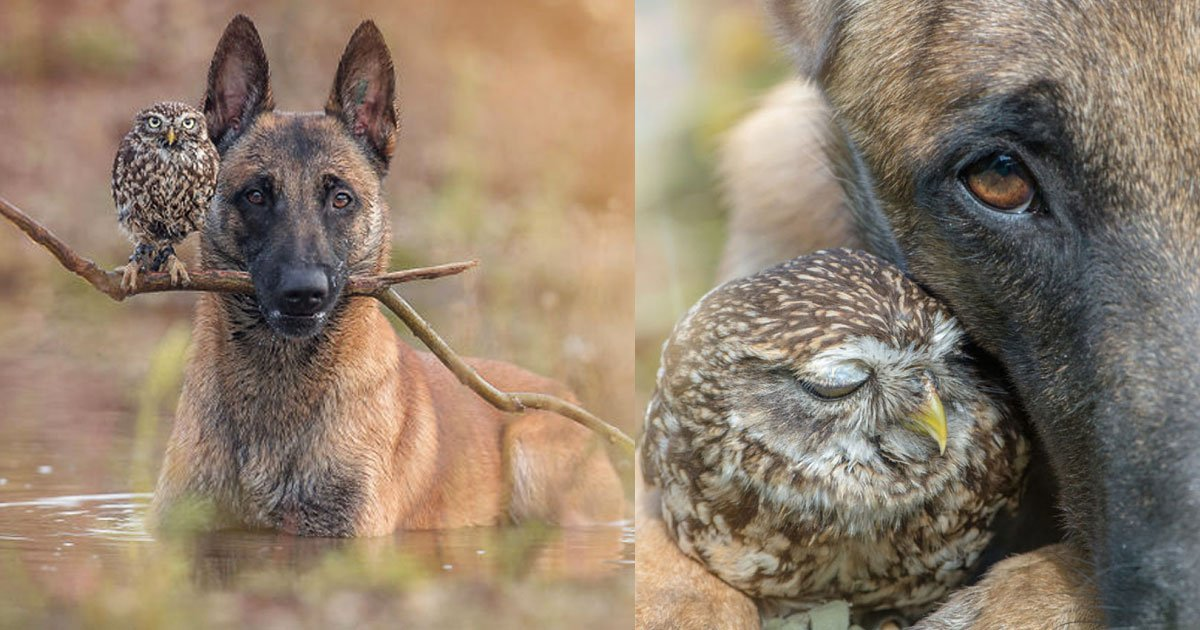 These 30 Photos Of Ingo The Dog And His Owl Friends Is The Only Thing You Need To See Today