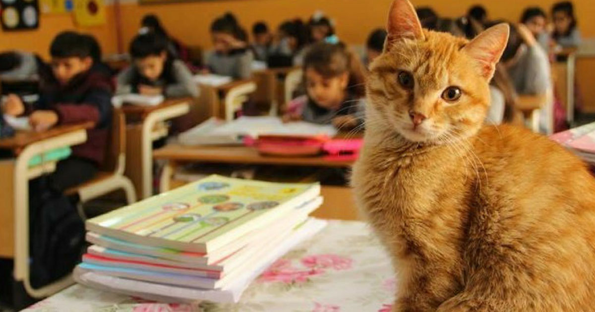 This Stray Cat Wanders Into Third Grade Classroom — Now He Wants To Stay Forever