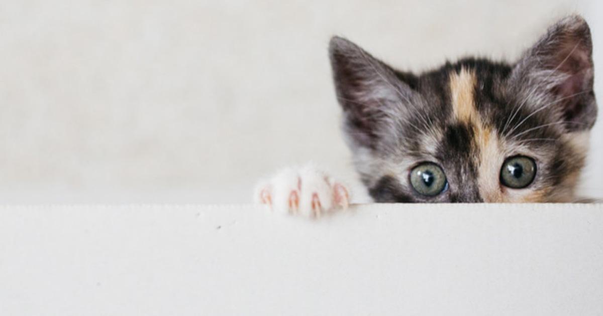 10 Katzen bei Photobombs die sicherlich jeden beeindrucken werden