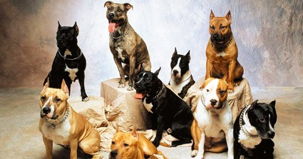 What Breed Of Dog Do You Most Resemble?